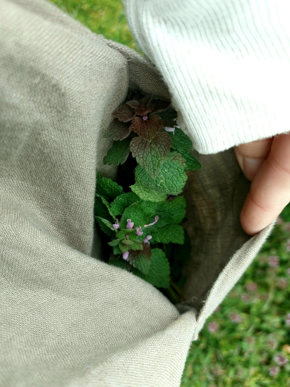 foraging purple dead nettle .jpg