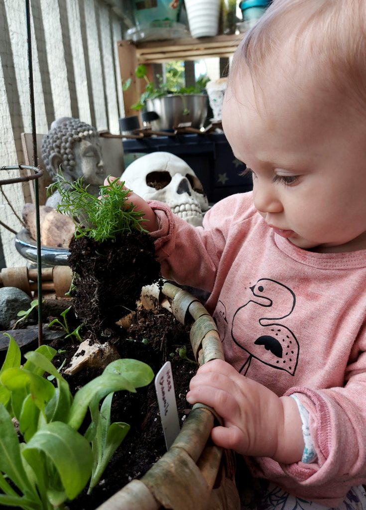 baby girl in pink pulling out plants