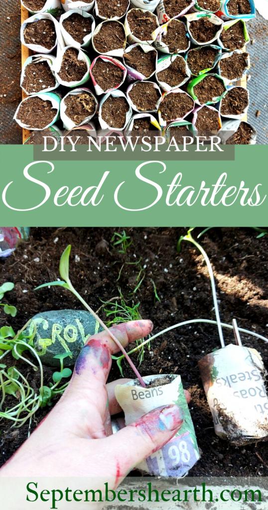 pinnable image seed starter with seedling