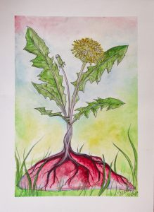 watercolor painting of a dandelion growing out of a placenta