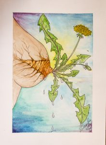 watercolour painting of a dandelion growing from a breast and lactating