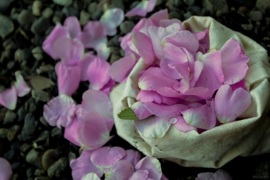 pink wild rose petals in a bag on a beach